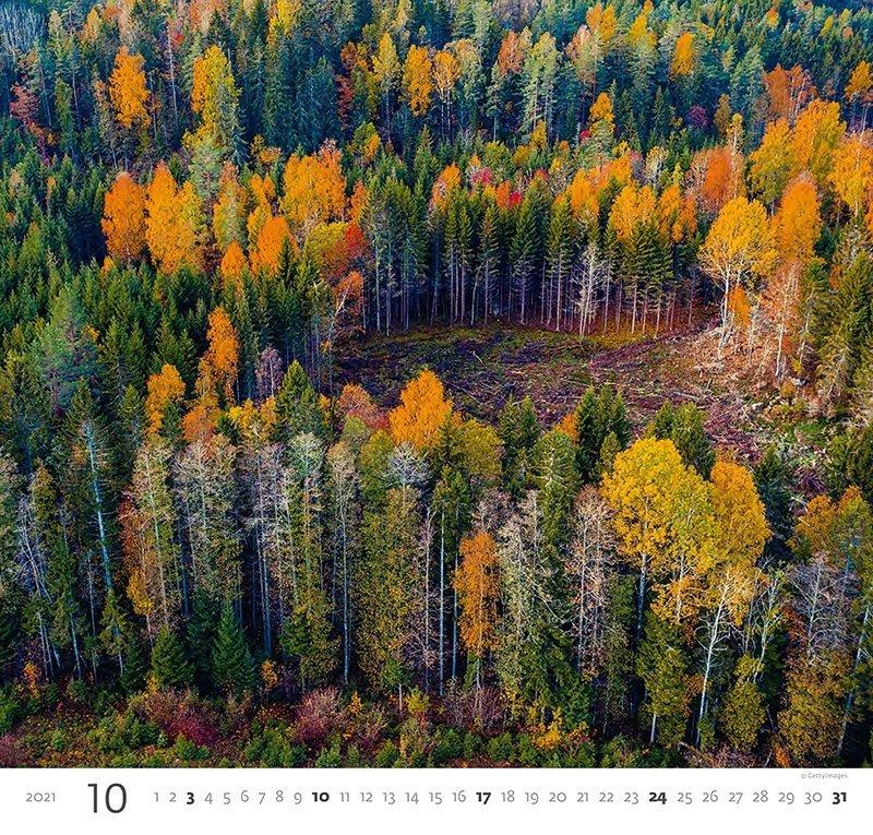 Kalendarz ścienny wieloplanszowy Forest 2021 - październik 2021