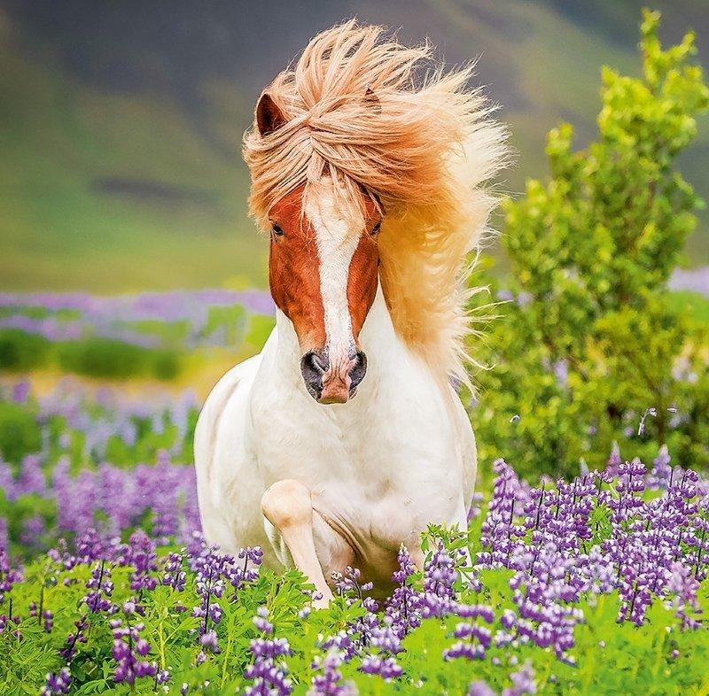 Kalendarz ścienny wieloplanszowy Horses 2022 z naklejkami - lipiec 2022