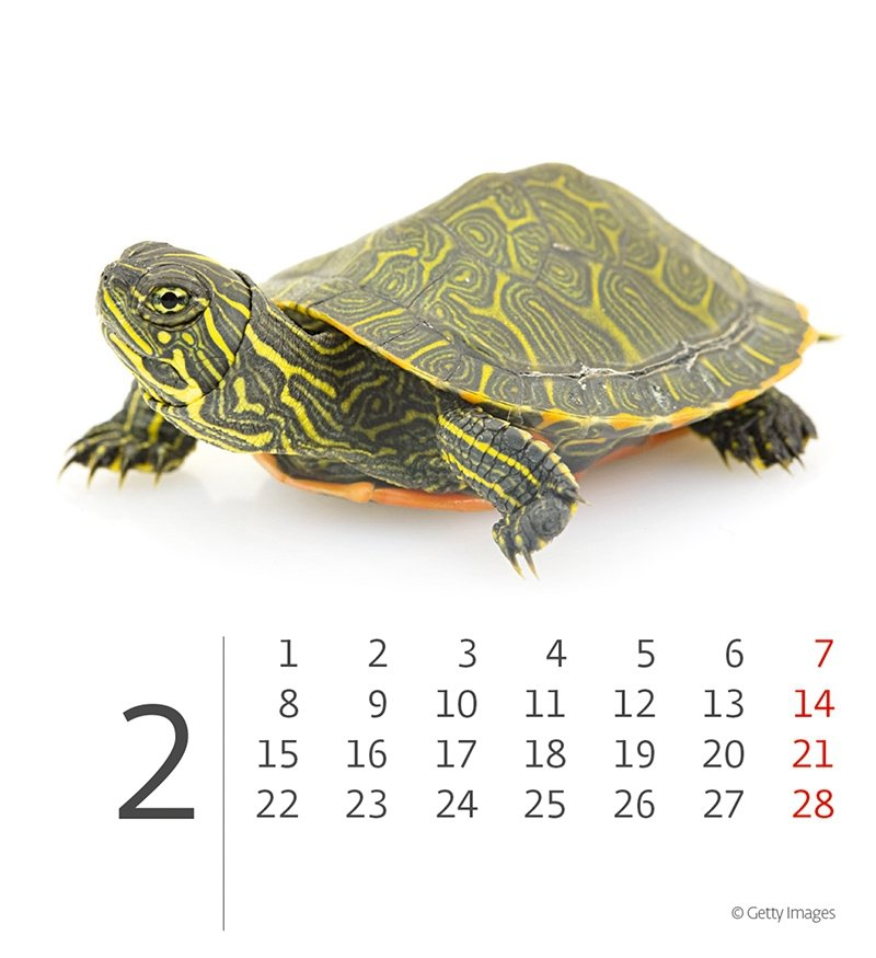 Kalendarz biurkowy 2021 Zwierzątka (Pets) - LUTY 2021