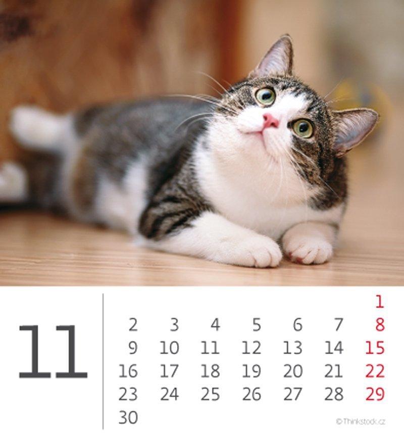 Kalendarz biurkowy 2020 mini Kotki - listopad
