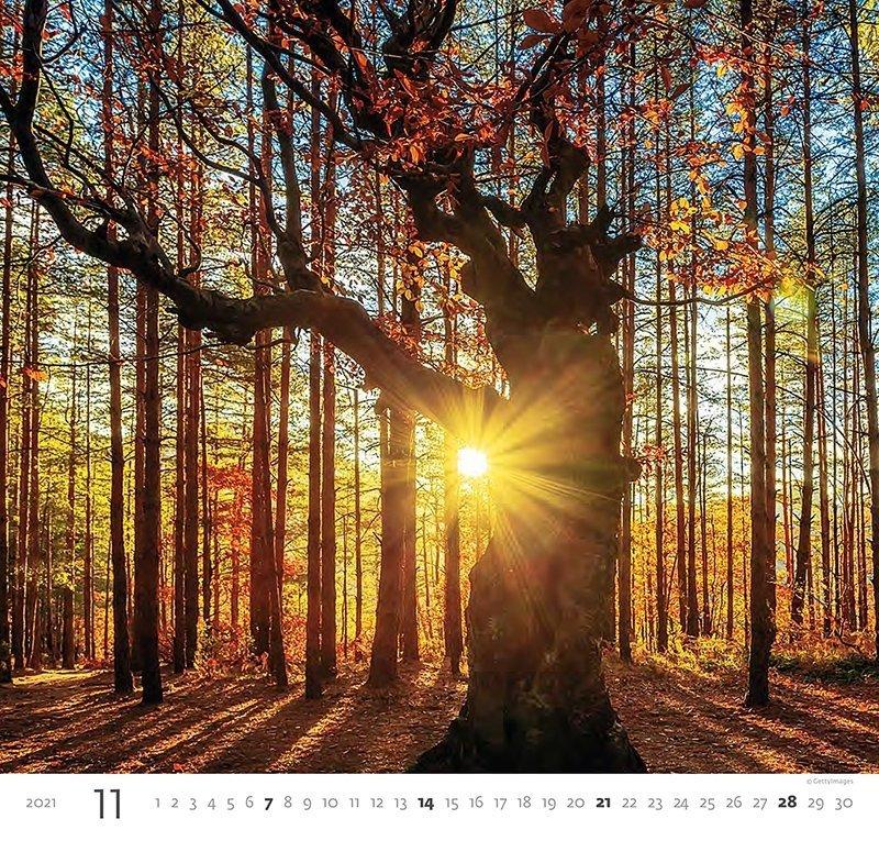 Kalendarz ścienny wieloplanszowy Forest 2021 - listopad 2021