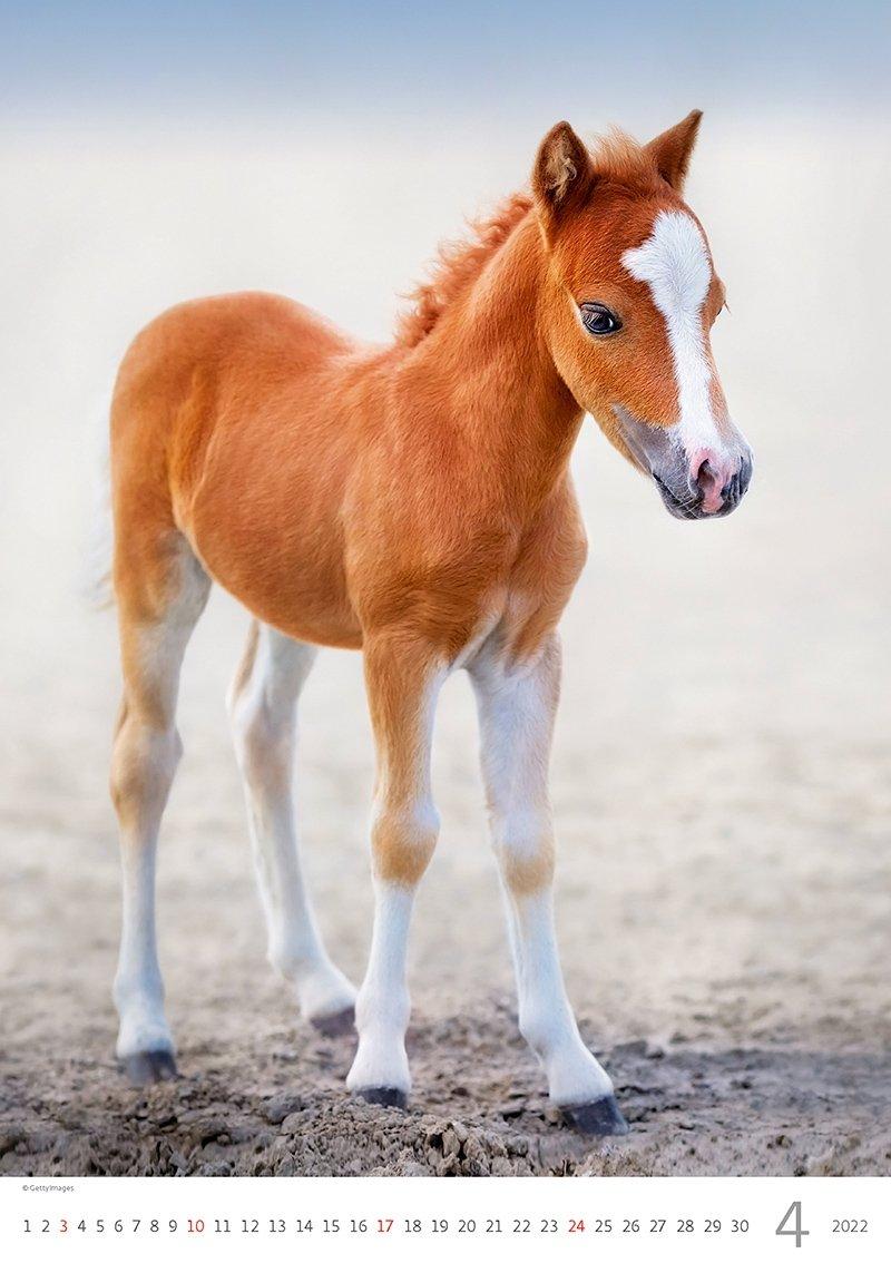 Kalendarz ścienny wieloplanszowy Horses Dreaming 2022 - kwiecień 2022