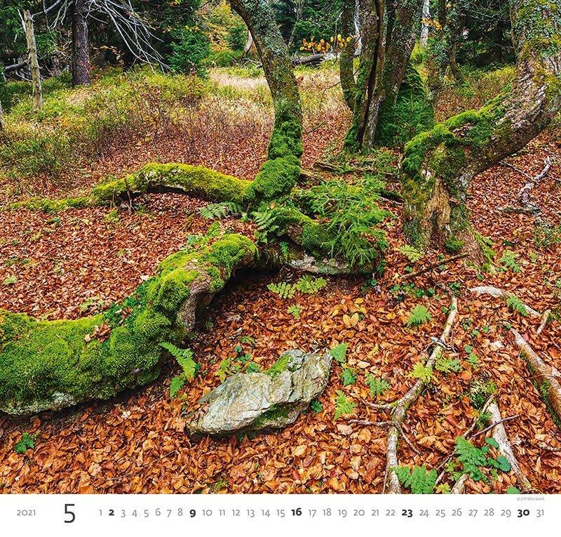 Kalendarz ścienny wieloplanszowy Forest 2021 - maj 2021