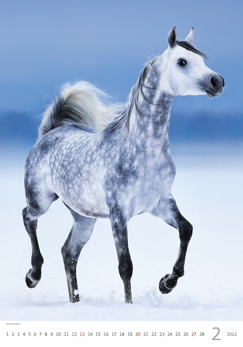 Kalendarz ścienny wieloplanszowy Horses Dreaming 2022 - luty 2022