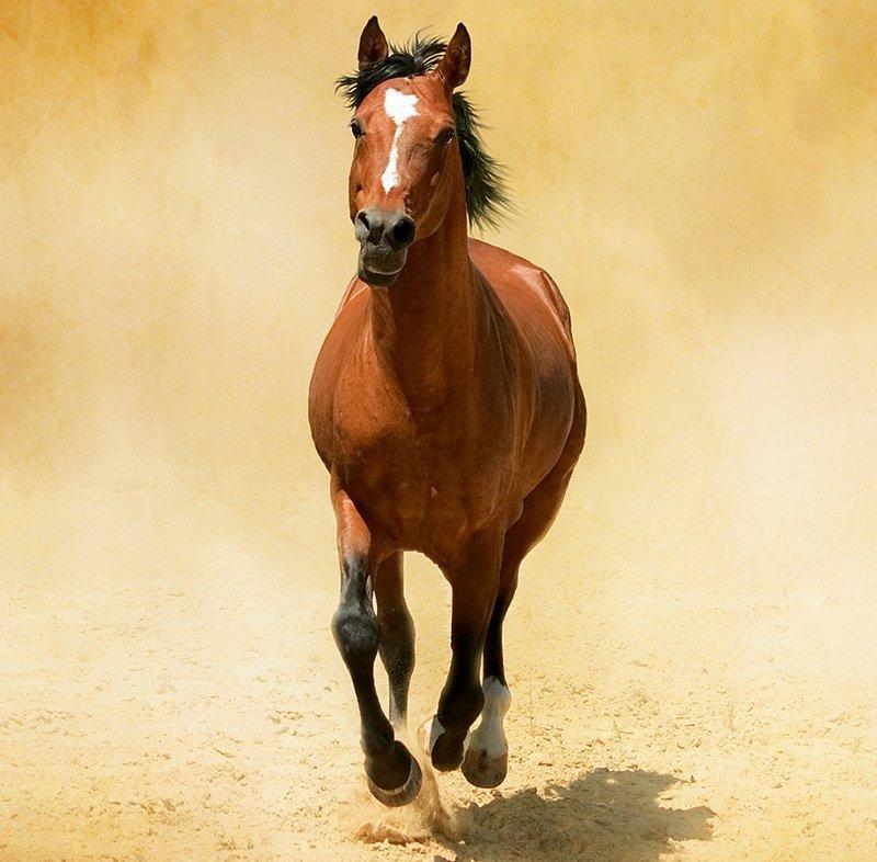 Kalendarz ścienny wieloplanszowy Horses 2022 z naklejkami - sierpień 2022