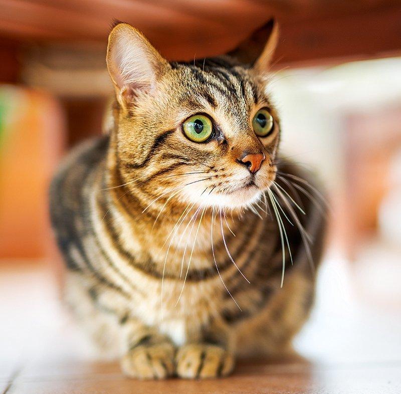Kalendarz ścienny wieloplanszowy Cats 2022 z naklejkami - listopad 2022