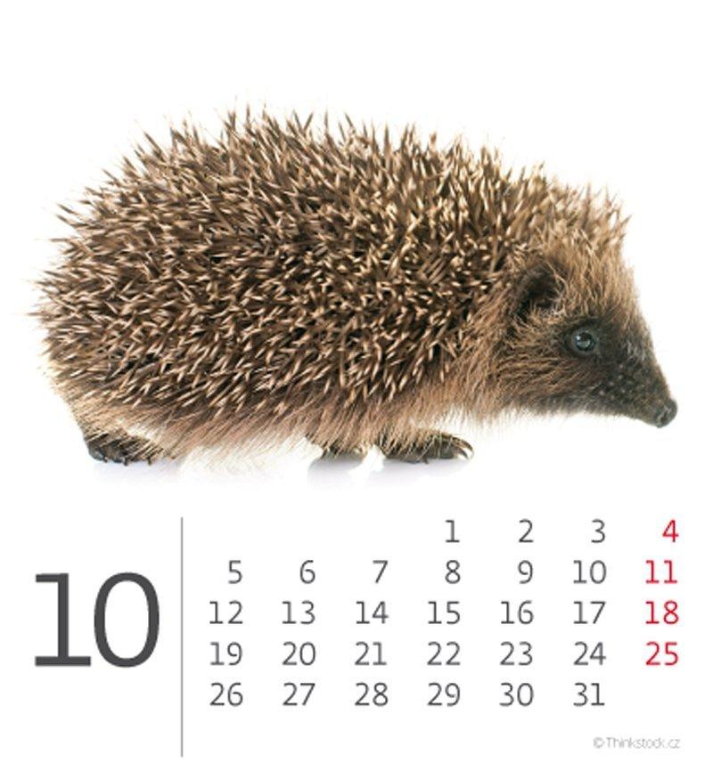 Kalendarz biurkowy mini Zwierzątka 2020 - październik