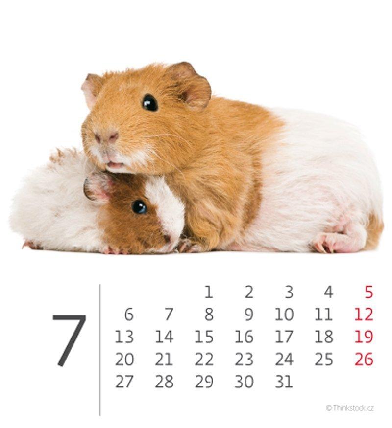 Kalendarz biurkowy mini Zwierzątka 2020 - lipiec
