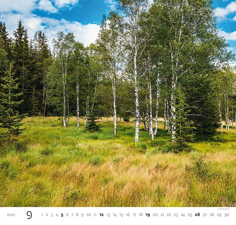 Kalendarz ścienny wieloplanszowy Forest 2021 - wrzesień 2021