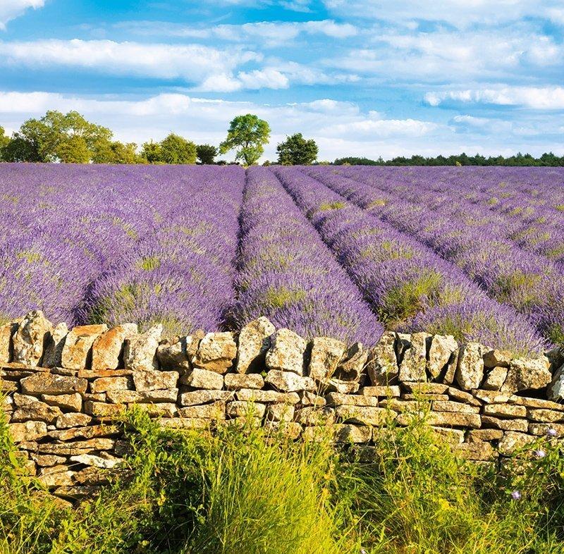 Kalendarz ścienny wieloplanszowy Provence 2022 z naklejkami - lipiec 2022