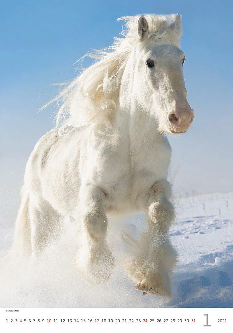 Kalendarz ścienny wieloplanszowy Horses Dreaming 2021 - styczeń 2021