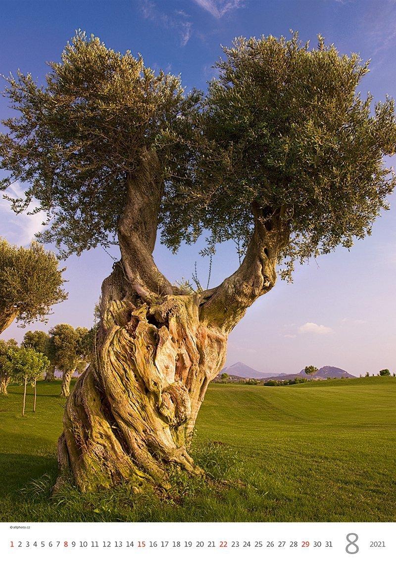 Kalendarz ścienny wieloplanszowy Trees 2021 - sierpień 2021