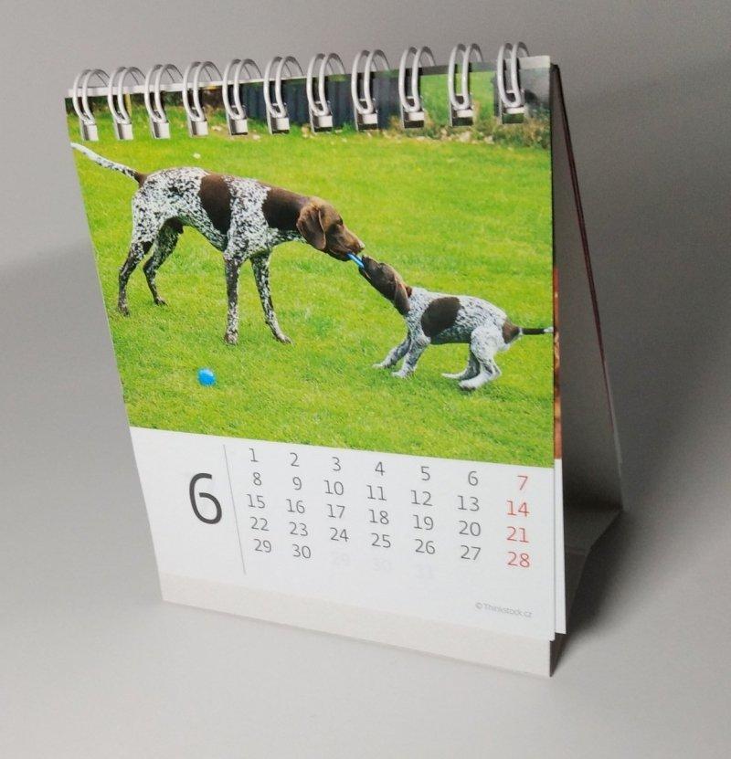 Kalendarz biurkowy mini Pieski 2020 - czerwiec 2020