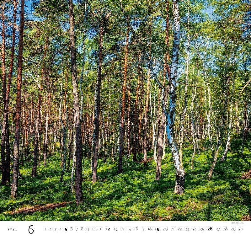 Kalendarz ścienny wieloplanszowy Forest 2022 - czerwiec 2022