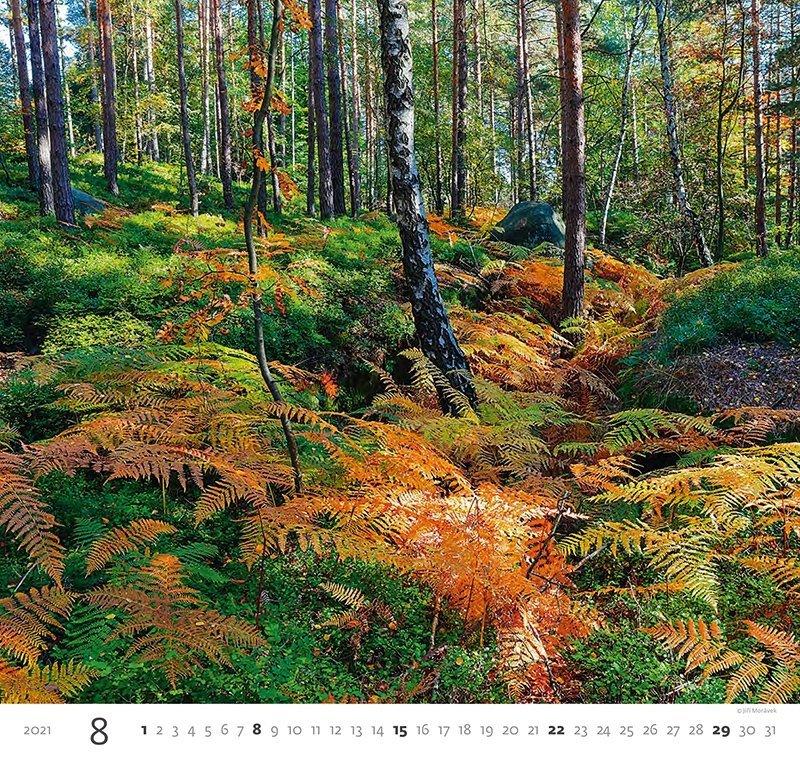 Kalendarz ścienny wieloplanszowy Forest 2021 - sierpień 2021