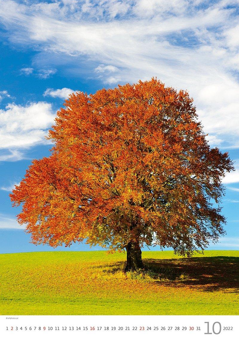 Kalendarz ścienny wieloplanszowy Trees 2022 - październik 2022