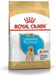 Royal 266520 Labrador Retriever Puppy 12kg