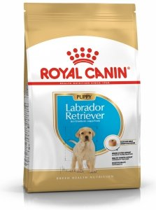 Royal 266520 Labrador Retriever Puppy 12kg