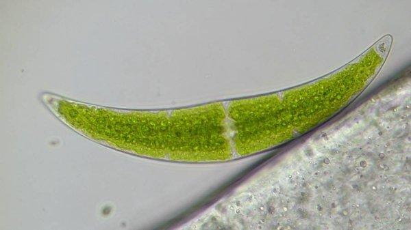 Mikroskop Bresser Researcher Trino 40–1000x