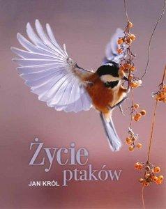 Życie ptaków