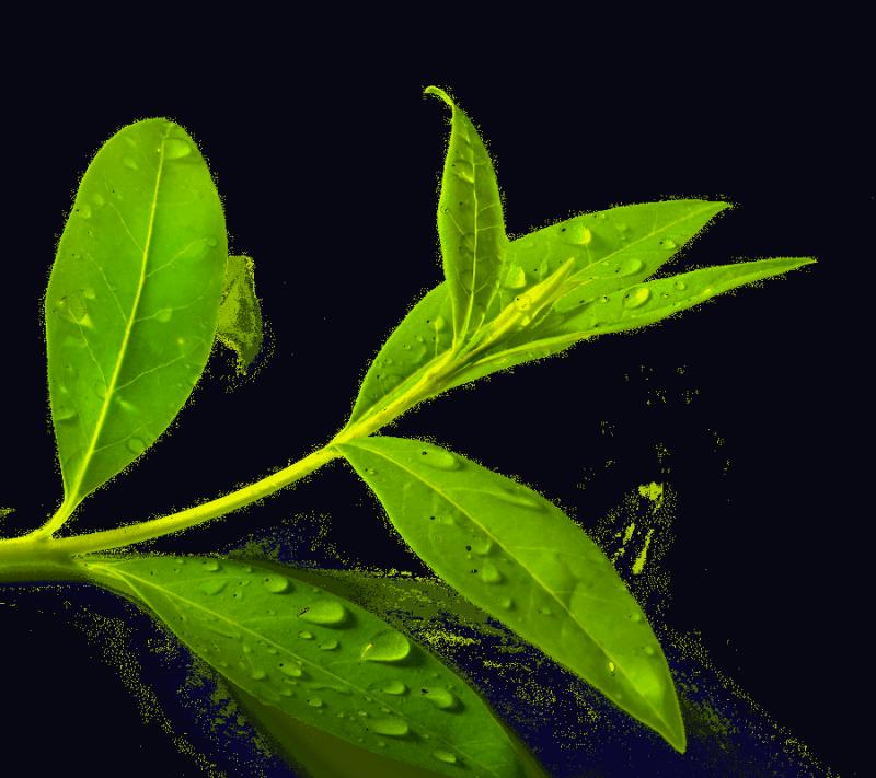 Olejek z Drzewa Herbacianego, 100% Naturalny, Aromatika, 5ml