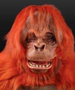 Maska lateksowa - Orangutan