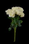 Bukiet róża x 7 kwiatów MIX