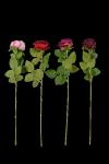 Róża VELVET DE LUX MIX - 20TJ103