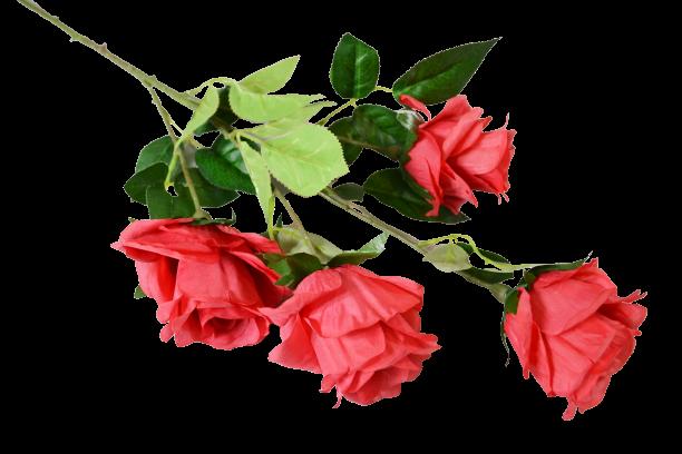 Róża na gałązce x 4 MIX