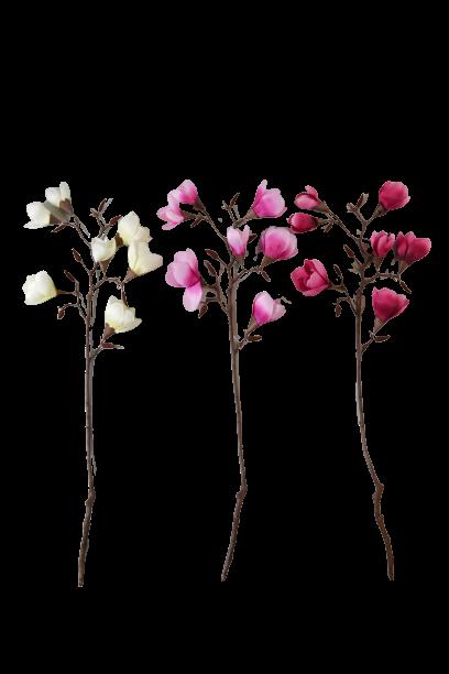 Magnolia na gałązce 7 kwiatów - BXT810