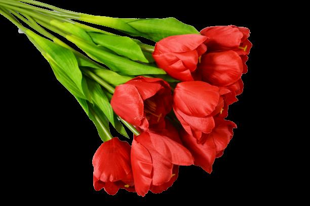Tulipan x 12 szt. MIX