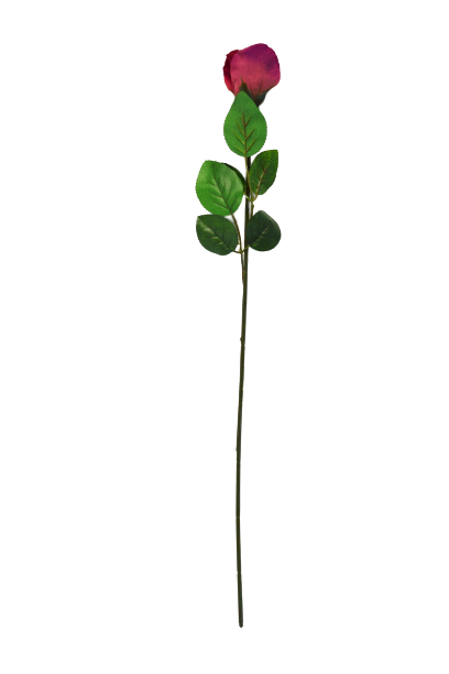 Róża - 99/064