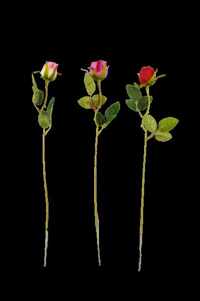 Róża drobna MIX - 20TJ090