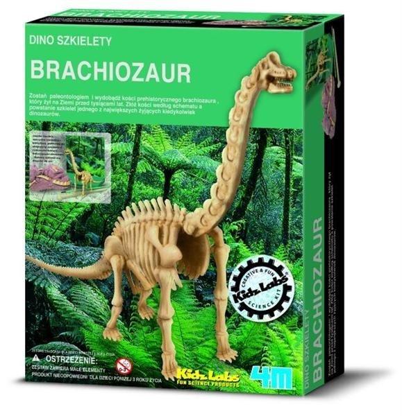 Wykopaliska Brachiosaurus