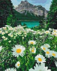 Obraz Paint it! Malowanie po numerach. Stokrotki w górach
