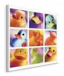 Duck Family Portraits - Obraz na płótnie