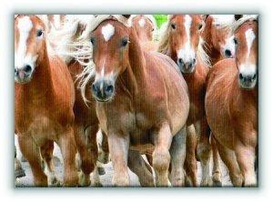 Bieg koni - Obraz na płótnie