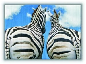 Zebry - Miłość - Obraz na płótnie