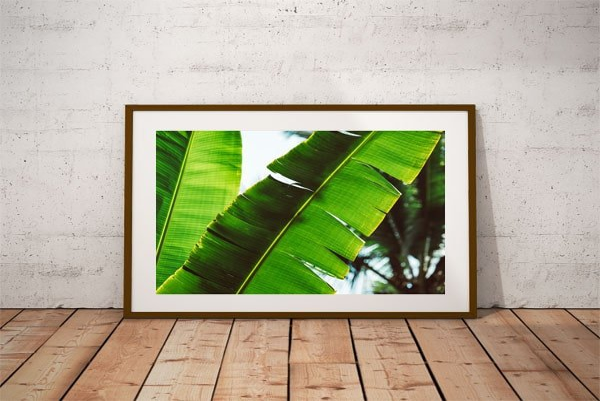 Leaf - plakat premium