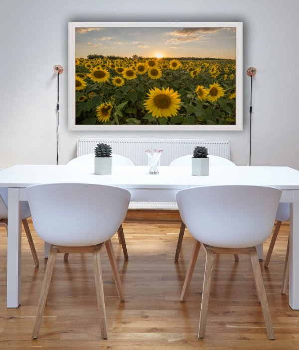 Słoneczniki - plakat premium