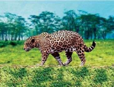 Latarka - projektor Animal