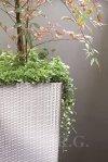 Blumentopf Blumenkübel Ratto Square 400 weiß