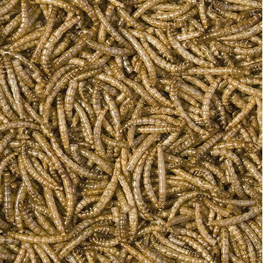 Trop. Meal Worms 250ml terraria