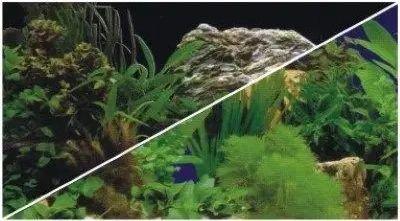 Hobby Tło akwariowe przedstawiające rośliny 30cm