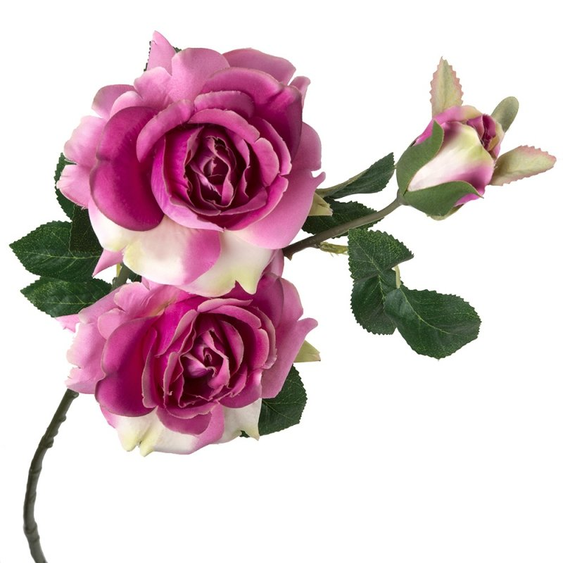 Gałązka Róży 2 Kwiaty I Pąk Krem-Amarant