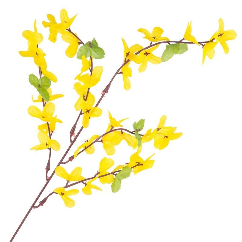 Gałązka Forsycja Żółta I Liście