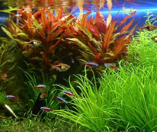 Aquabotanique Planta Activ Fosfo P+ 200Ml Najlepszy