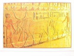 EGYPT. SAKKARA THE TOMP OF MER ROKA. PLUGHING