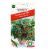Pomidor balkonowy Vilma