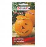 Dynia olbrzymia BIG MAX typ Halloween nasiona 2 g